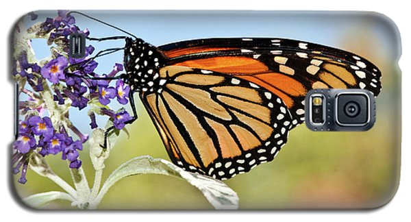 Galaxy S5 Case featuring the photograph Autumn Monarch Butterfly 2016 by Lara Ellis