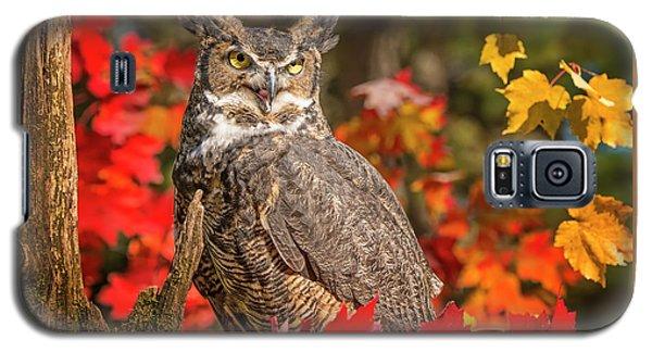 Autumn Owl Galaxy S5 Case