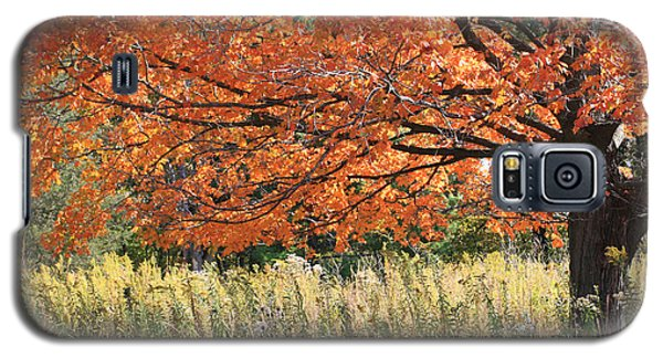 Galaxy S5 Case featuring the photograph Autumn Red   by Paula Guttilla
