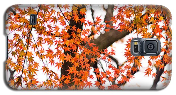 Autumn Red Leaves On A Tree   Galaxy S5 Case