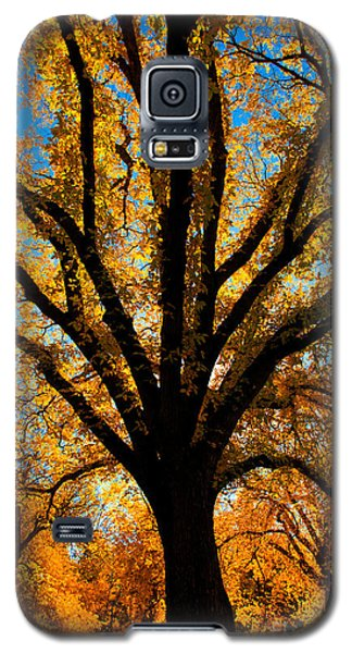 Autumn Season 4 Galaxy S5 Case