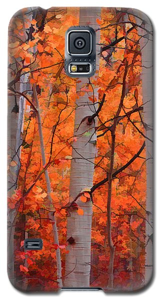 Autumn Splendor Galaxy S5 Case by Don Schwartz