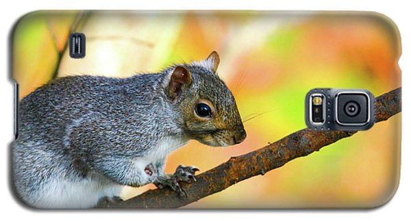 Galaxy S5 Case featuring the photograph Autumn Squirrel by Karol Livote