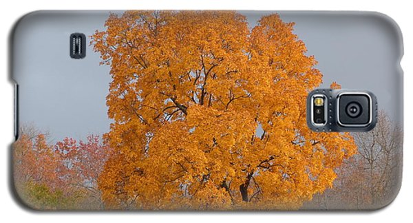 Galaxy S5 Case featuring the photograph Autumn Tree by Donald C Morgan