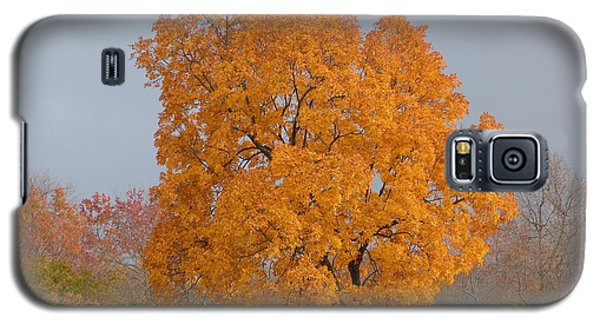 Autumn Tree Galaxy S5 Case by Donald C Morgan