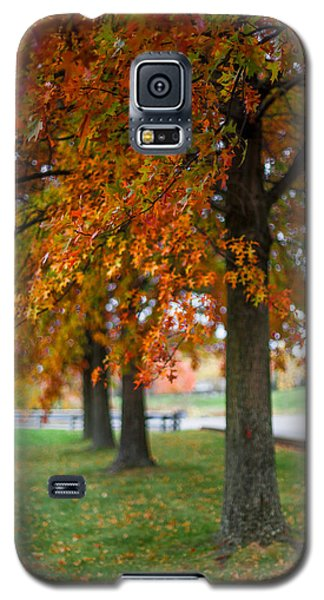 Autumn Trees In A Row Galaxy S5 Case by April Reppucci