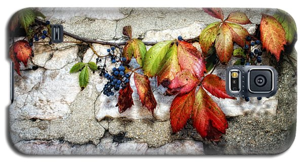 Autumn Vines Galaxy S5 Case