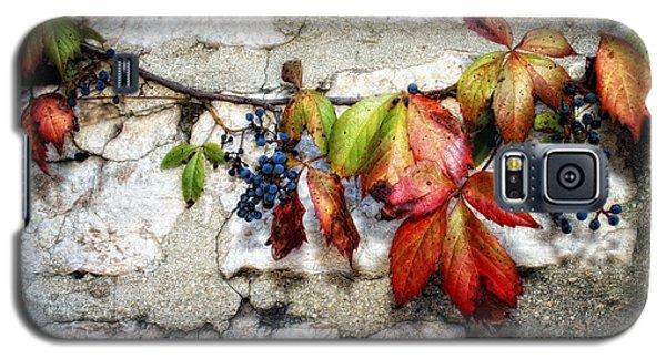 Autumn Vines Galaxy S5 Case