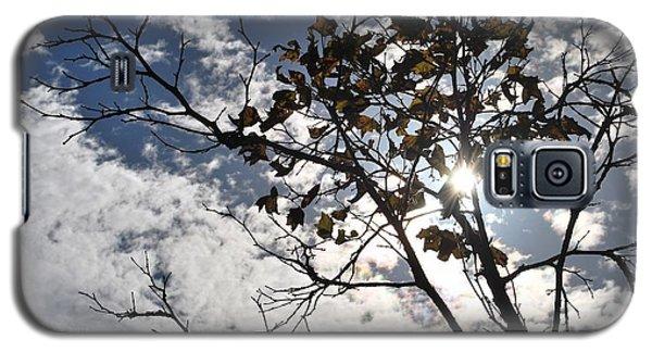 Autumn Yellow Back-lit Tree Branch Galaxy S5 Case