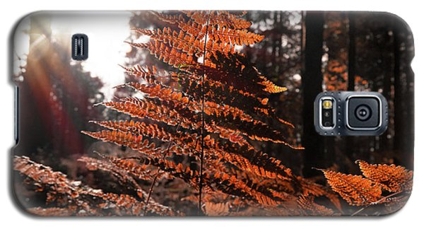 Autumnal Evening Galaxy S5 Case