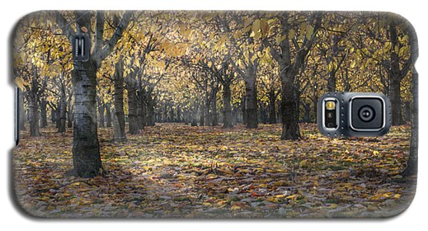 Galaxy S5 Case featuring the photograph Autumns Strokes by Bruno Santoro