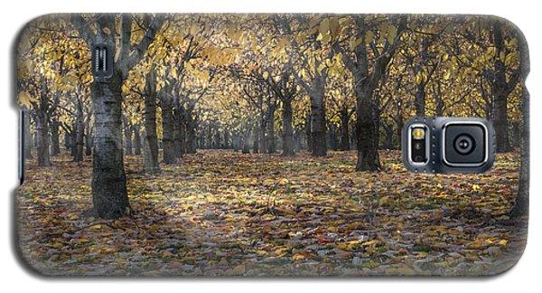 Autumns Strokes Galaxy S5 Case by Bruno Santoro