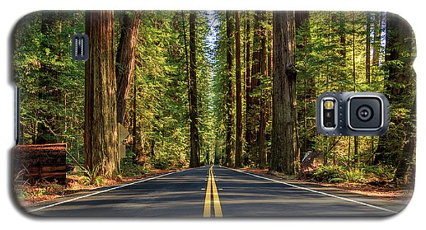 Avenue Of The Giants Galaxy S5 Case by James Eddy