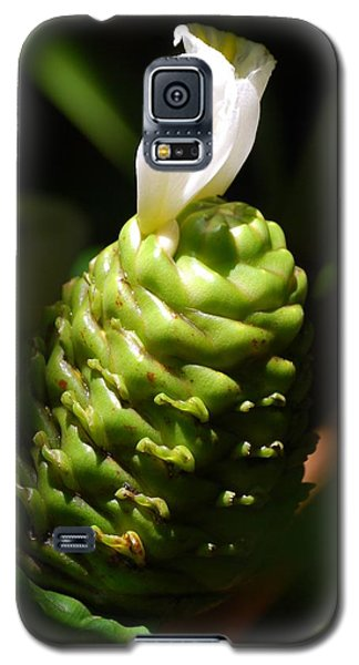 Galaxy S5 Case featuring the photograph Awapuhi Plant by Debbie Karnes