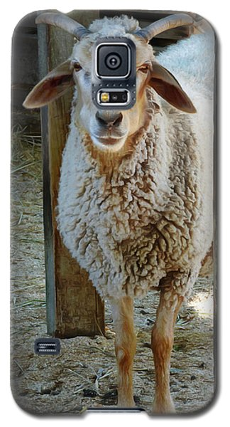 Awassi Sheep Galaxy S5 Case by Steve Taylor