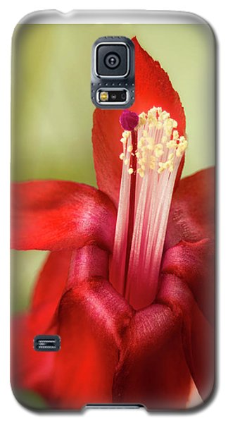 Awe Of Nature Galaxy S5 Case