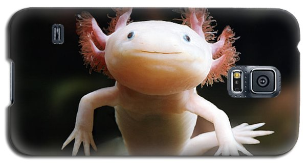 Axolotl Face Galaxy S5 Case