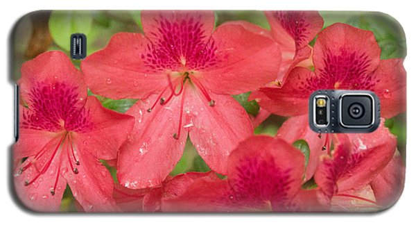 Galaxy S5 Case featuring the photograph Azalea Blossoms by Linda Geiger