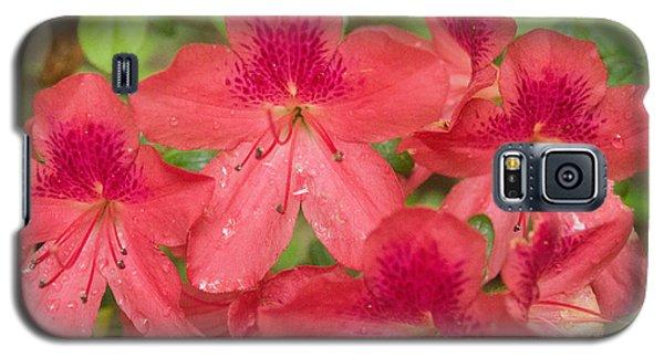 Azalea Blossoms Galaxy S5 Case