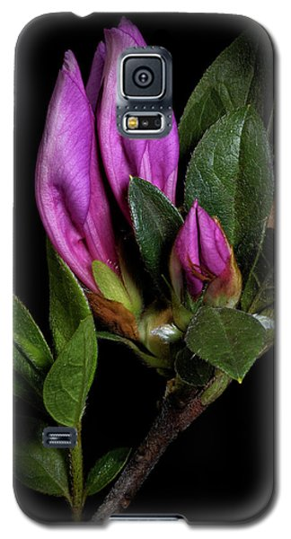 Galaxy S5 Case featuring the photograph Azalea Buds by Richard Rizzo