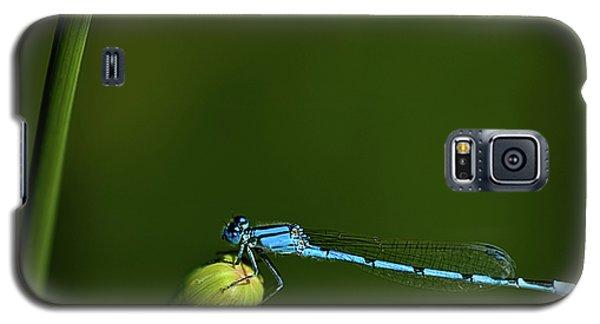 Azure Damselfly-coenagrion Puella Galaxy S5 Case
