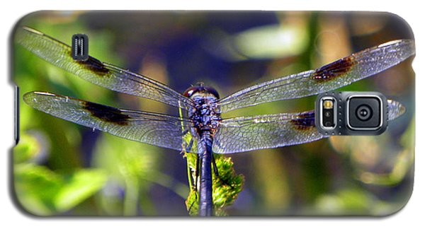 Azure Dragonfly Galaxy S5 Case