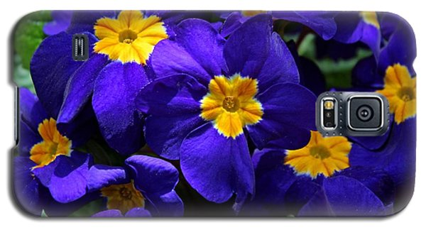 Galaxy S5 Case featuring the photograph Azure Primrose by Michiale Schneider