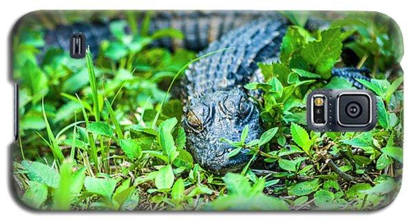 Baby Alligator Galaxy S5 Case