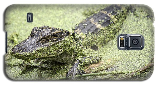 Baby Alligator Galaxy S5 Case