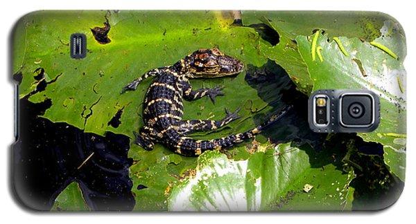 Baby Alligator Galaxy S5 Case by Terri Mills