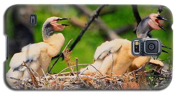 Galaxy S5 Case featuring the photograph Baby Anhinga Chicks by Barbara Bowen