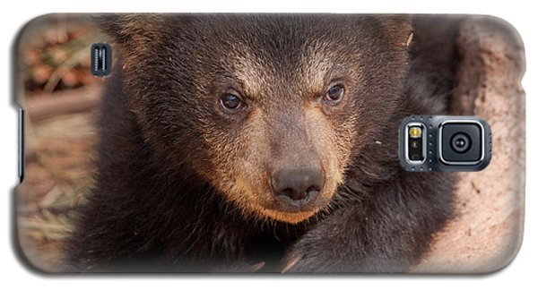 Baby Bear Portrait Galaxy S5 Case by Laurinda Bowling