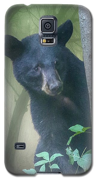 Baby Bear Takes A Peek Galaxy S5 Case