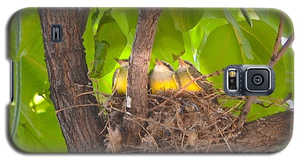 Baby Birds Waiting For Mom Galaxy S5 Case