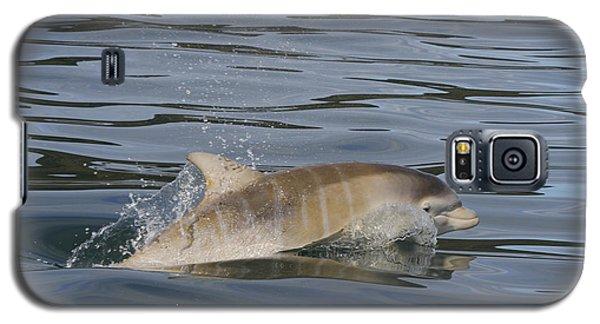Baby Bottlenose Dolphin - Scotland  #35 Galaxy S5 Case