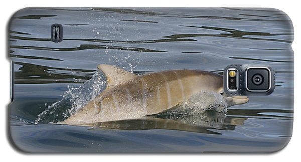 Baby Bottlenose Dolphin - Scotland  #35 Galaxy S5 Case