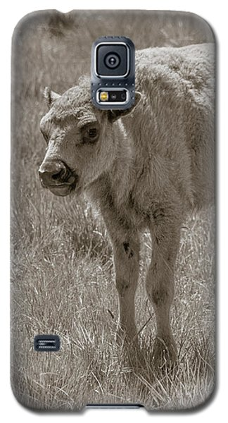 Galaxy S5 Case featuring the photograph Baby Buffalo by Rebecca Margraf