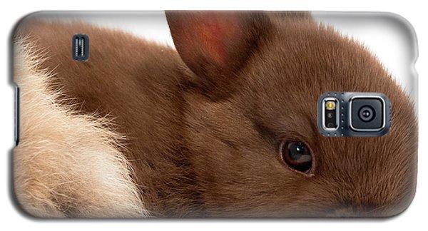 Baby Bunny  #03074 Galaxy S5 Case