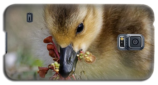 Baby Chick With Water Flowers Galaxy S5 Case