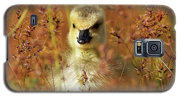 Baby Cuteness - Young Canada Goose Galaxy S5 Case