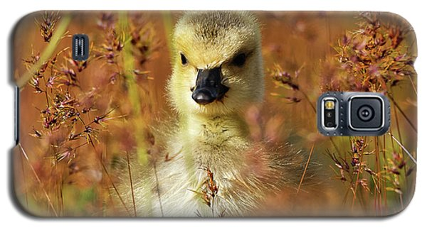 Baby Cuteness - Young Canada Goose Galaxy S5 Case
