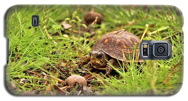 Baby Eastern Box Turtle Galaxy S5 Case