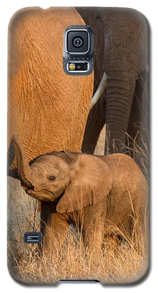 Baby Elephant 2 Galaxy S5 Case