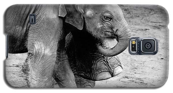 Baby Elephant Security Galaxy S5 Case