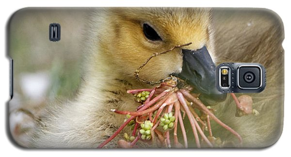 Baby Gosling Collecting Flowers Galaxy S5 Case