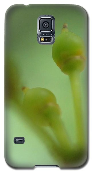 Baby Grapes Galaxy S5 Case