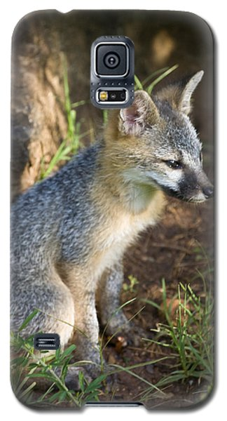 Baby Gray Fox Resting On Bluff Side Galaxy S5 Case