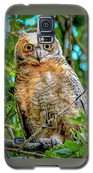 Baby Great Horned Owl Galaxy S5 Case