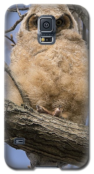 Baby Great Horned Owl Galaxy S5 Case by Stephen Flint