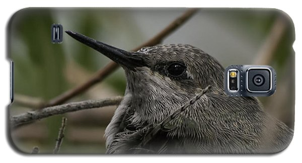 Galaxy S5 Case featuring the photograph Baby Humming Bird by Lynn Geoffroy